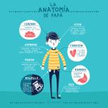 AnatomíaPapa_AndreaTobar